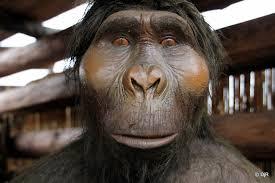 Homo erectus apelike
